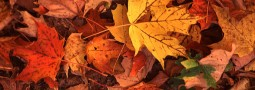 Autumnal Letter from the Editor